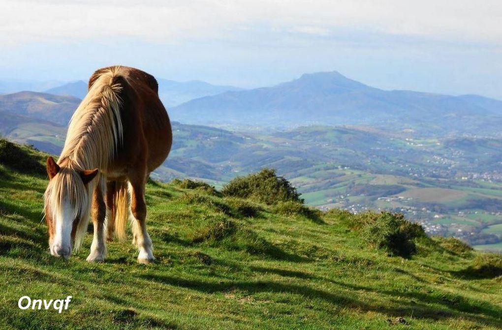 Pottok, Pays Basque (Pyrénées-Atlantique 64) AAA