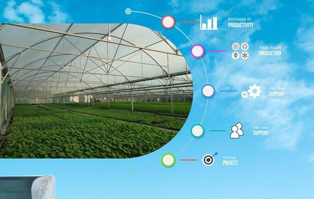 Benefits of Greenhouse Production