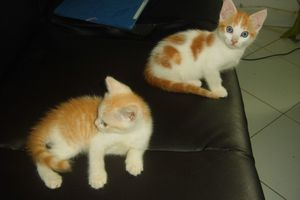 2 chatons - 2 mois - adoptés