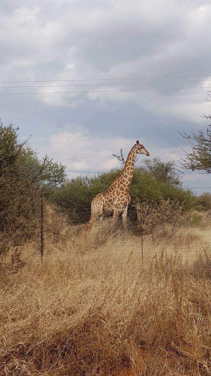 5 semaines au Botswana : infos pratiques et bilan