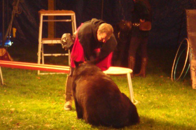 Album - spectacle-d-ours-marche-2012