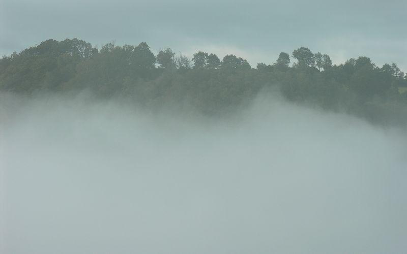 La forêt dans les nuages