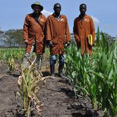New initiative bridges plant breeding digital divide
