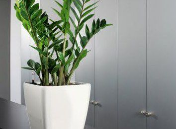 Plant For Hire Reduce Sick Leaves and Increase Working Environment Efficiency