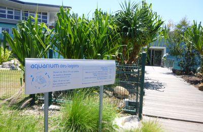 Escapade à Nouméa ( transit sur le chemin de la métropole )