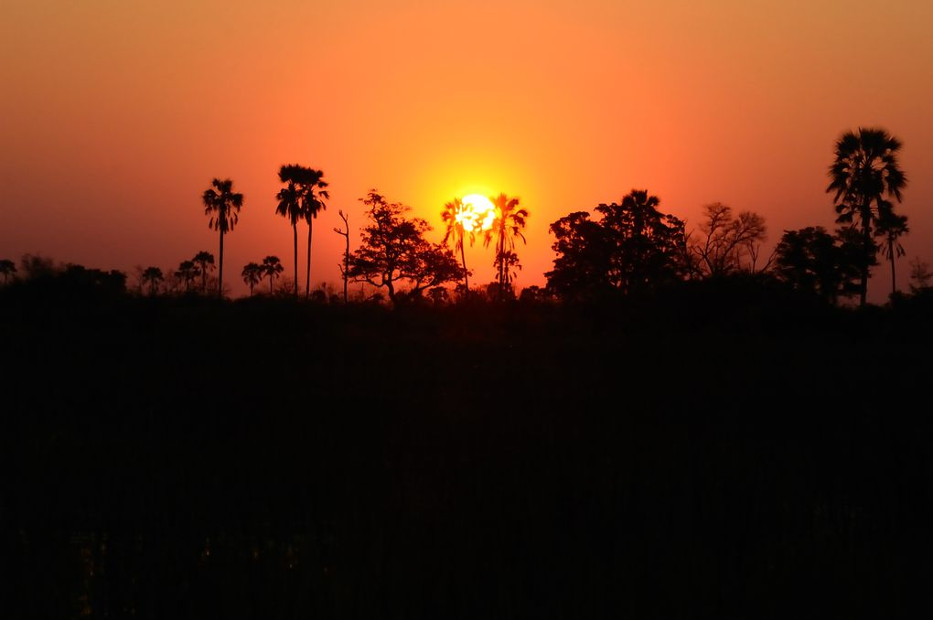 Album - 20100831_Okavango