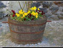 La bachole fleurie (Le Broc 63) ...
