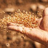 Le Conseil Constitutionnel annule l'autorisation de vente de semences paysannes !