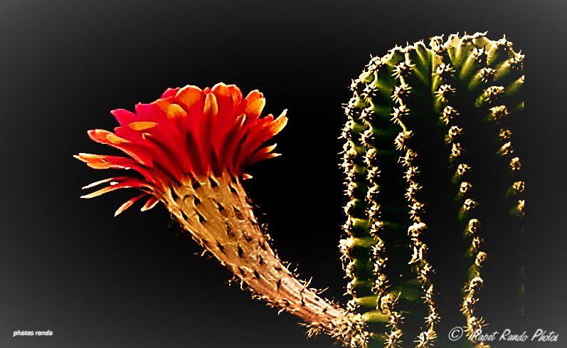 Balades dans les Cactus un peu partout, sur plusieurs années
