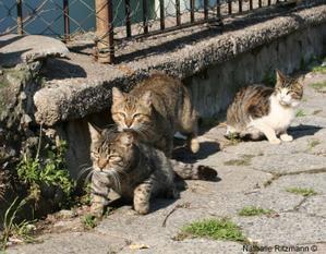 Les chats de mars - mart kedileri