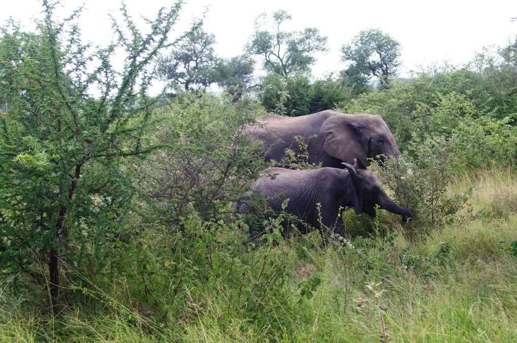 Album - Une Journée au parc Kruger