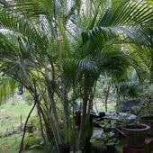 un jardin au Sri Lanka - crea.vlgomez.photographe et bricoleuse touche à tout.over-blog.com