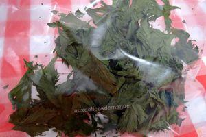 Astuce anti-gâchis : côtes et feuilles de céleri