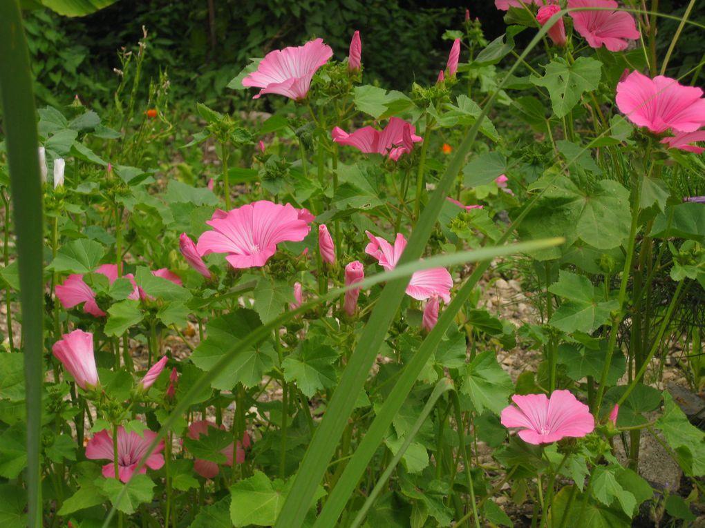 Photo Album - notre jardin