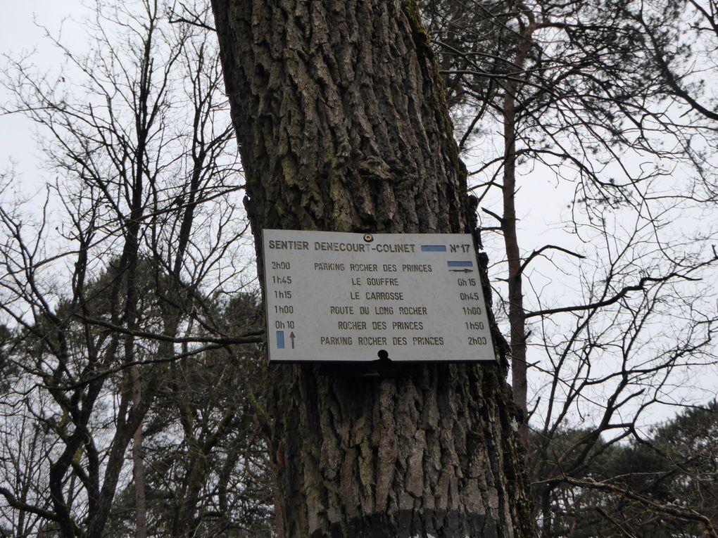 Dès notre entrée dans le massif forestier, des panneaux indiquent que des chasses sont en cours, nous avançons prudemment par le sentier Médicis, évitant les parcelles où étaient postés des chasseurs, notre accompagnateur leur a demandé si nous pouvions continuer notre randonnée, ils ont été coopérants en nous laissant passer et en avertissant leurs collègues qu'un groupe passait à proximité.