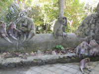Parenthèse enchantée à Bali