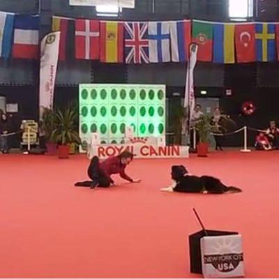 Dog-dancing.fr