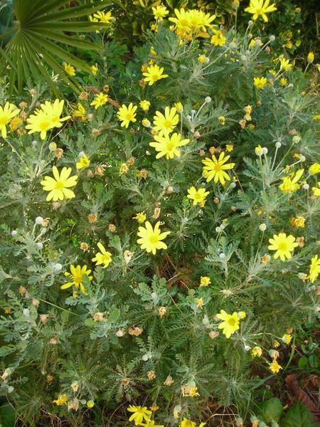 mobyx - fleurs - maçonnerie