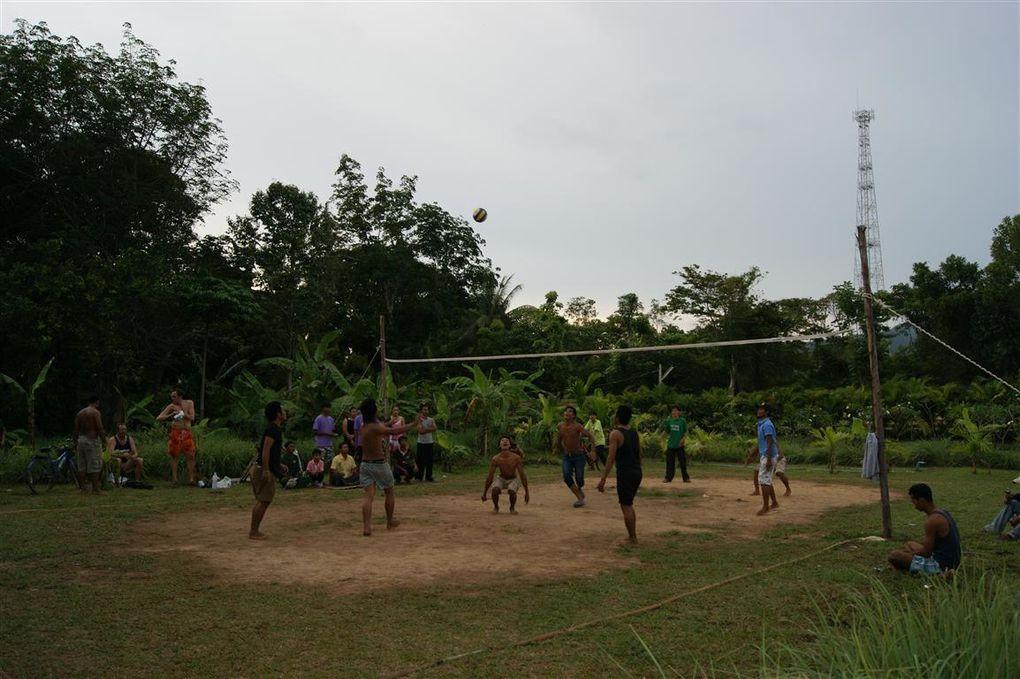 Album - wild-volley