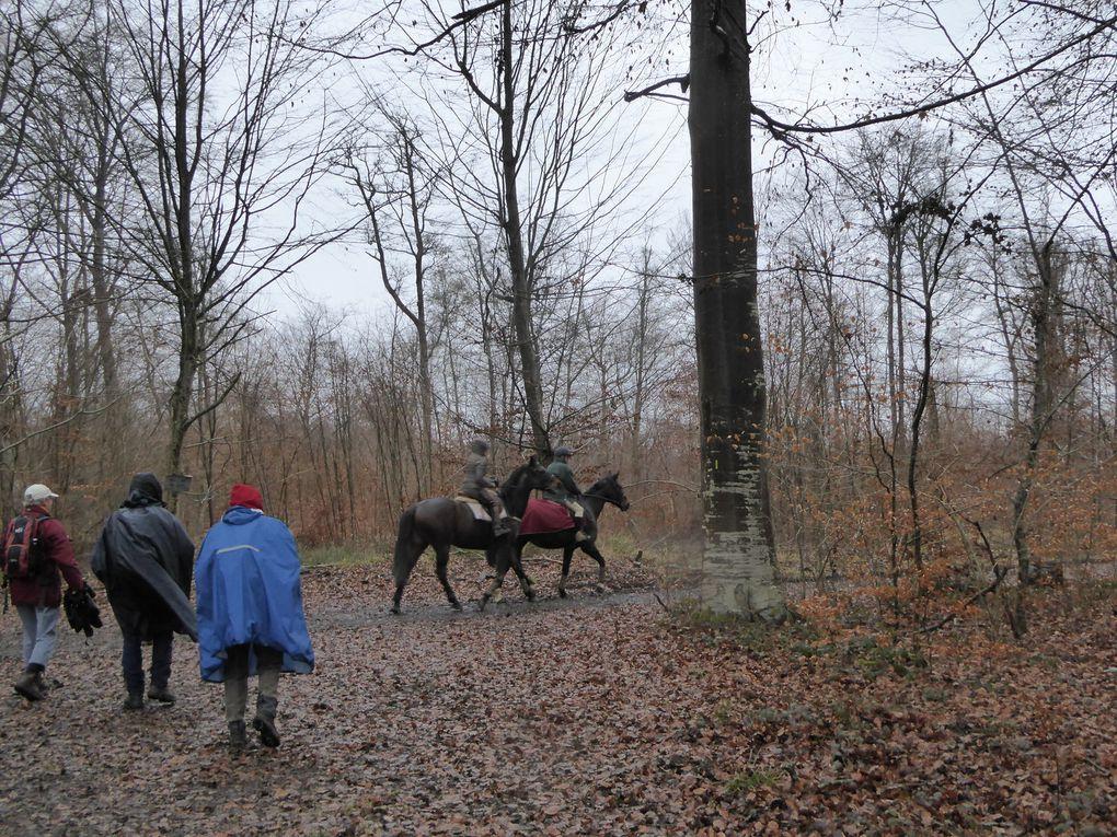 La pluie s'est invitée dans le Bois de la Glandée...