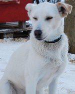 Photos de mes Alaskans Huskies à tous âges et en tous lieux !