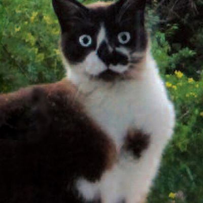 À Léo, mon chat, mon petit trois pattes