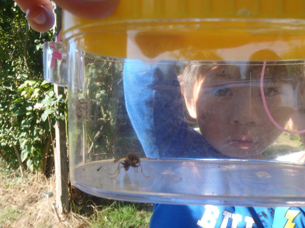 Une drôle d'abeille au jardin de Mélisse