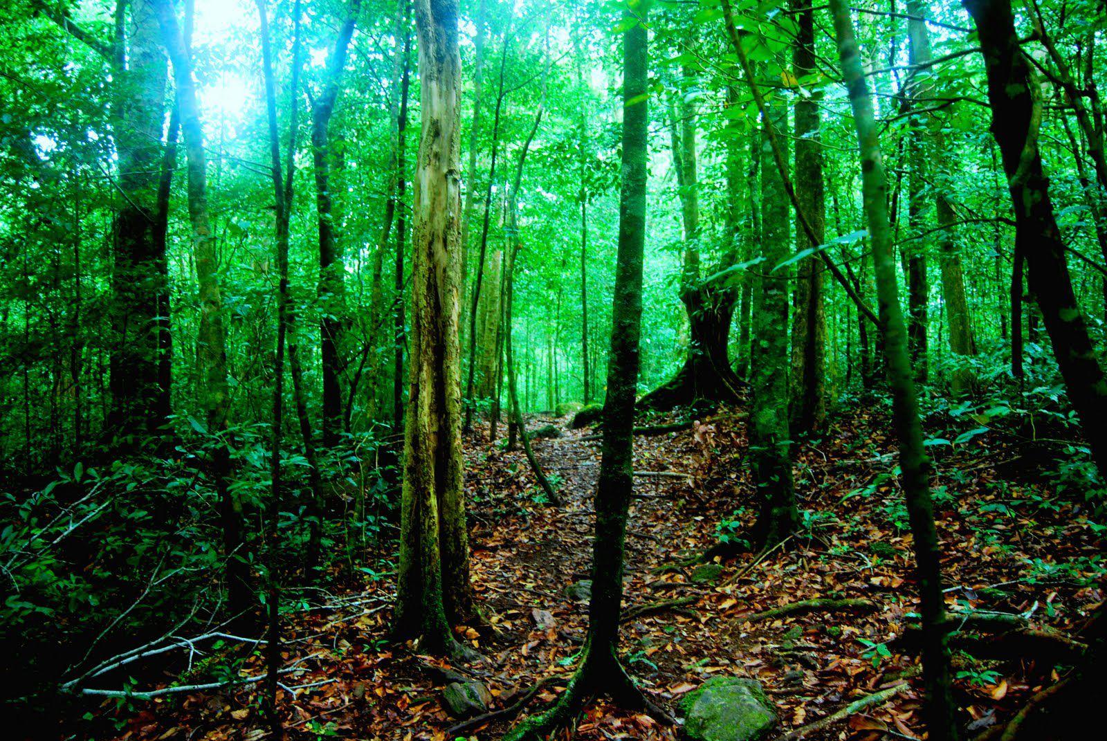 La forêt, notre guide