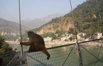 HIPPIE-CITY : RISHIKESH – 04/12/2011