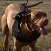 Dominance, Individual Personality, and Leadership in Dogs