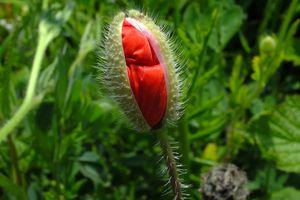 DIALOGUES ET ENTRETIENS : Lucrèce et Posidonius - Partie 1