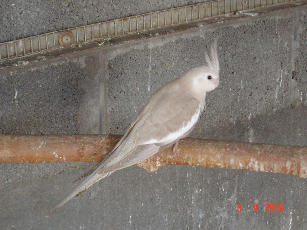Oiseaux issus de l'élévage d'un adhérent