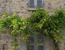 vigne ...