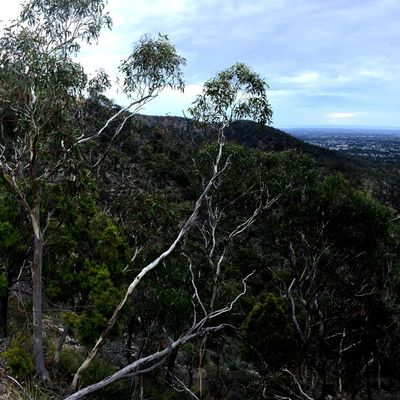 The Yurrebilla trail - Mardi 3 mars 2020 - 55km - 6h47'