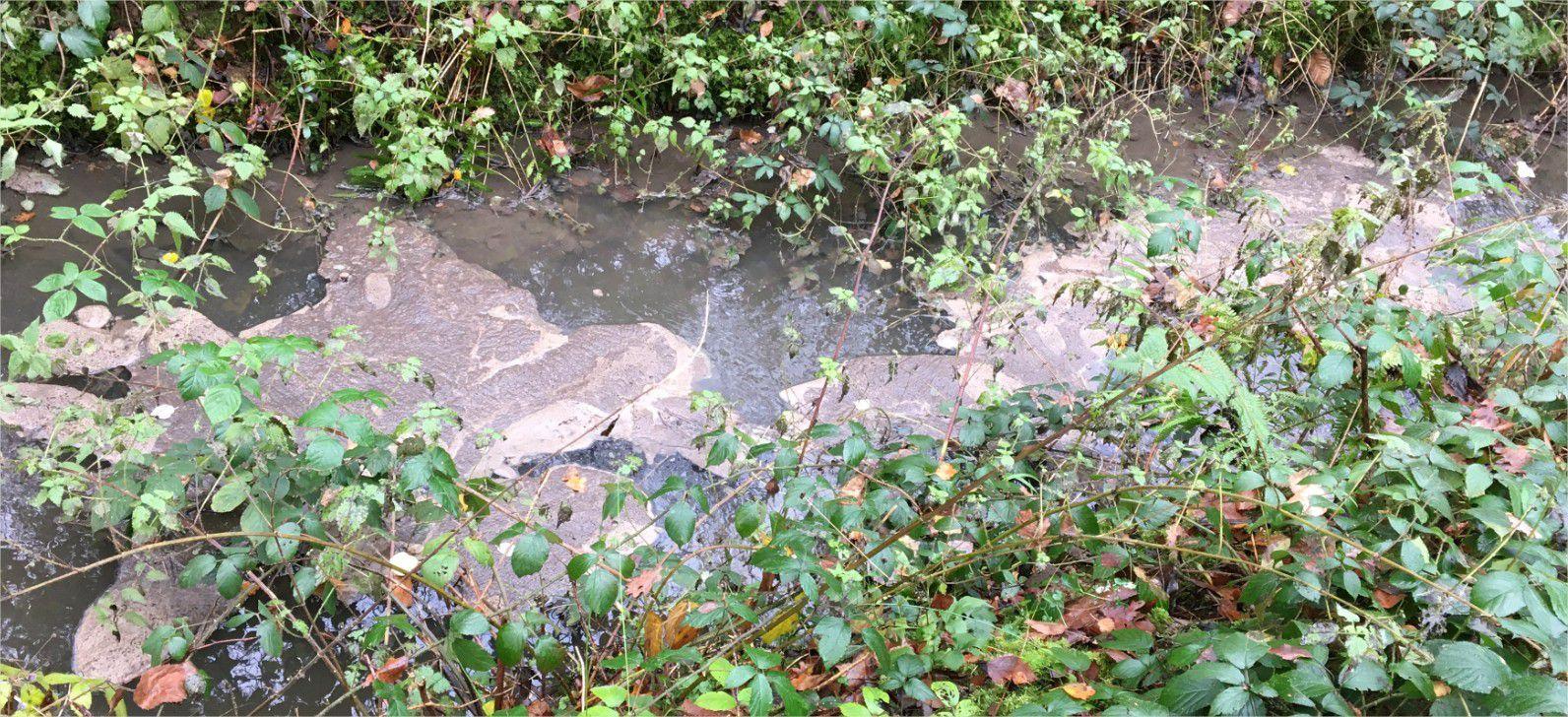 Photos du 13.12.2020 de surnageants d'épuration sur le ru du Rhodon en forêt de Trappes