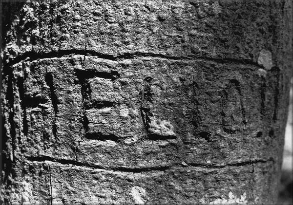 """<h2>- BLACK & WHITE - Photographies de la barrière anti-char dite """"<a target=""""_self"""" href=""""http://zeporg.over-blog.org/categorie-1183716.html"""">Toblerone</a>"""" </h2> <p>2005 """"Toblerone"""" exposition et supplément<br />Travail photographique en noir et blanc. <br />Thématique : La ligne de fortification antichar de la Promenthouse communément appelée """"Les Toblerones"""". <br />Action sur le terrain et en laboratoire pour aboutir à une sélection finale de vingt photographies à développer en grand format"""