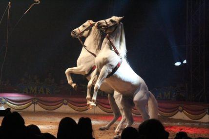 AMAR, le cirque de France à Autun ! C'était les 11,12,13 octobre 2013 sur la place du Champ de Mars.