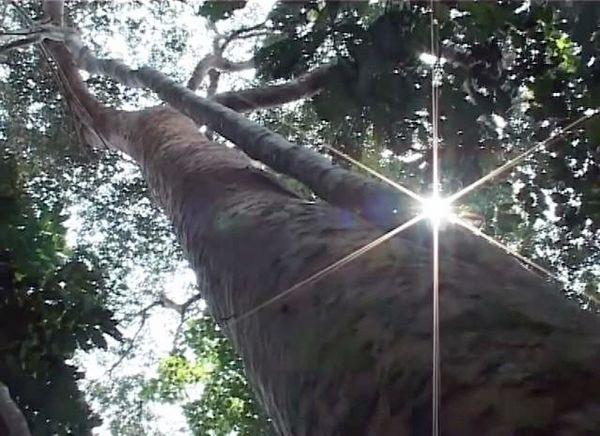 Relancer la recherche agricole et forestière en RDCongo