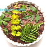 Gateau Herbier Cerises Chocolat