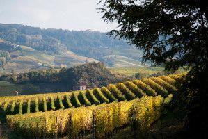 Le Piémont du vin, ça vous dit quelque chose ?