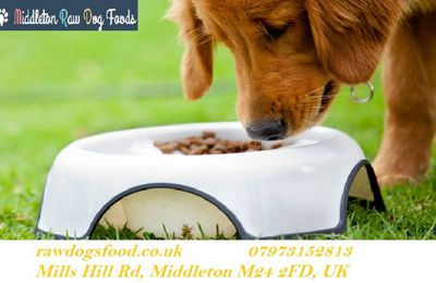 Natural and Healthy Diet for Dog  in Manchester in 2020