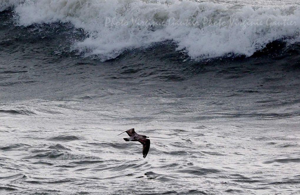 La Turballe - La mer - Agitée