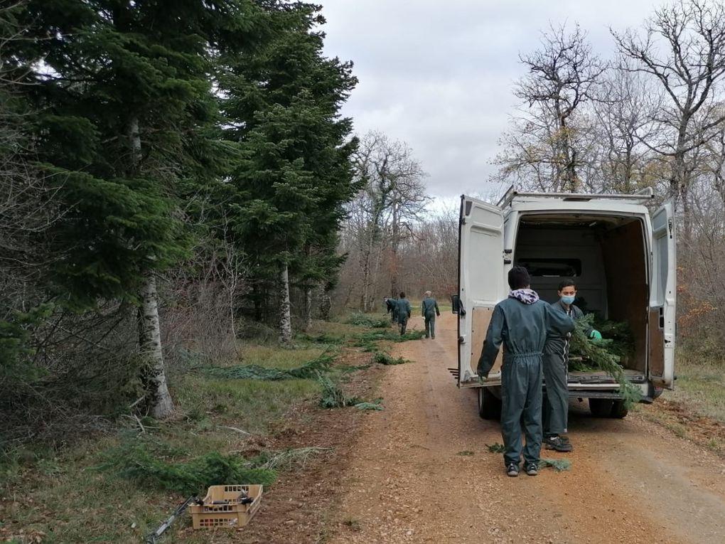 Après l'élagage, retrait et tri de tous les éléments inutiles qui seront replacés dans la forêt, puis chargement dans le véhicule.