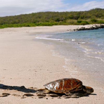 Les Galapagos : encore un rêve éveillé ! (Adrien, 6 ans)