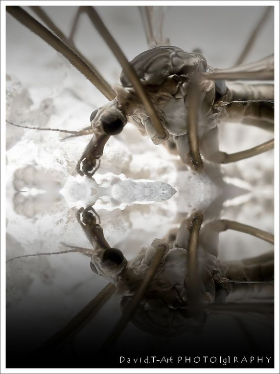 Album - insectes-animaux