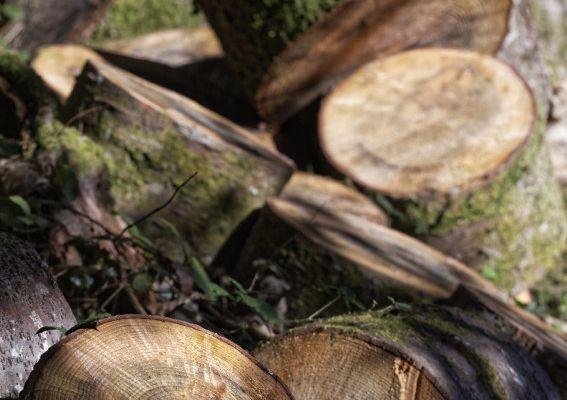 Automne en forêt d'Ambazac