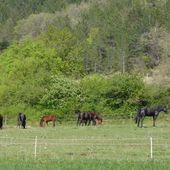 Des chevaux dans la Drôme pour #photodimanche - Dans la Bulle de Manou