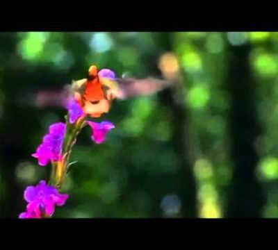 Le Chant de la Nature.