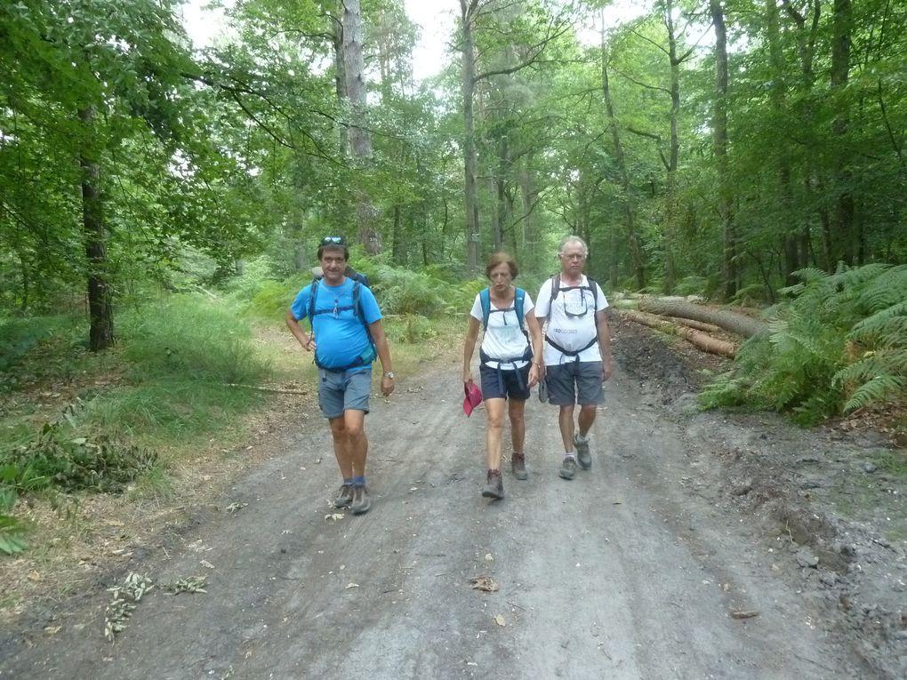 Randonnée de Fontainebleau à Bois-le-Roi - 15,6 km.