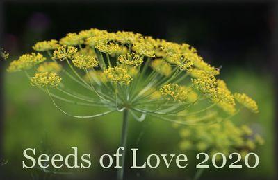 SEEDS OF LOVE 2020 - C'est parti !